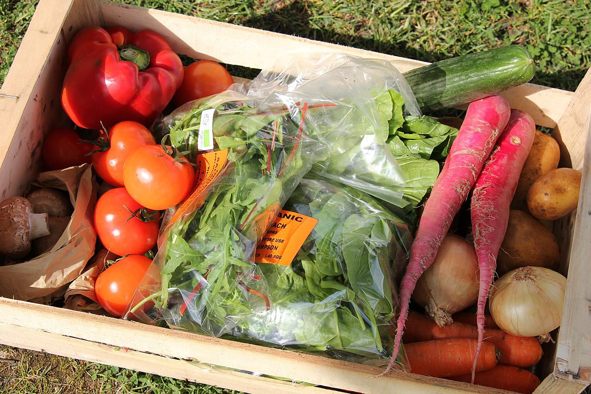 Large organic vegetable box - Ned