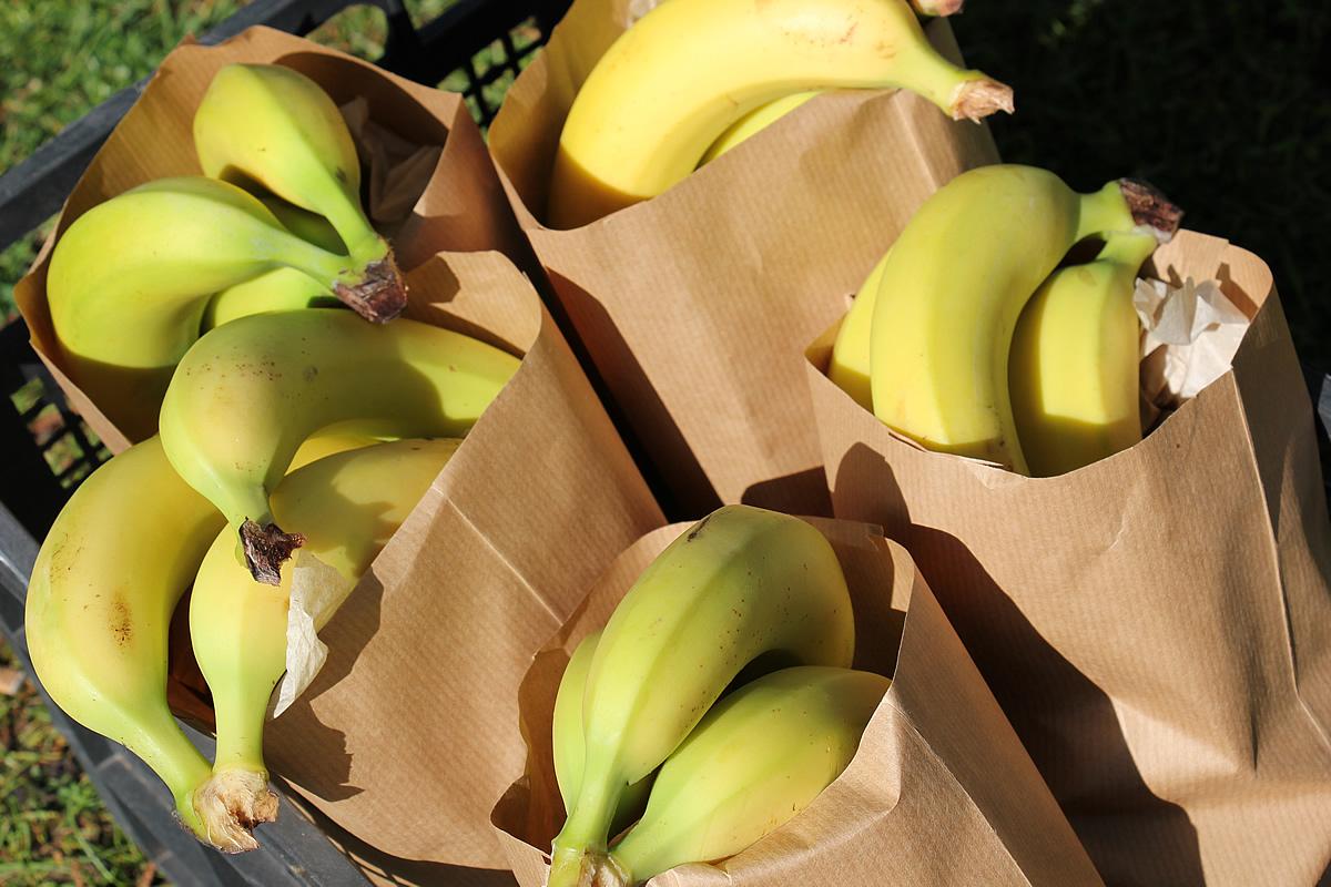 Melanie - Medium Organic Fruit Bag